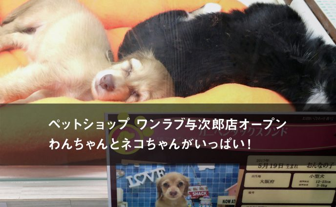 ペットショップ ワンラブ与次郎店オープン。わんちゃんとネコちゃんがいっぱい!